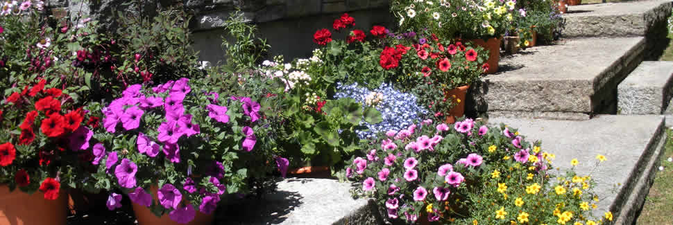 Add a splash of colour to the patio with patio plants supplied by Mortimers Nurseries